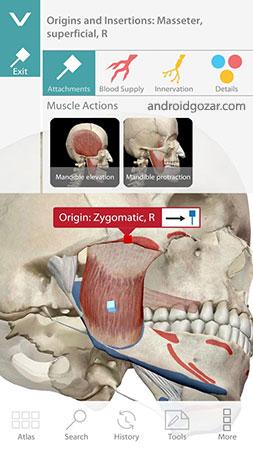 human-anatomy-atlas-5