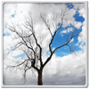 lonely-tree-live-wallpaper-icon