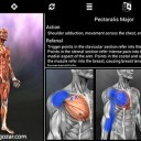 muscle-trigger-point-anatomy-2