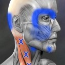 muscle-trigger-point-anatomy-6