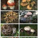 mushrooming-3