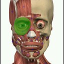 visual-anatomy-2