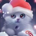 yang-the-cat-1