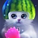 yang-the-cat-7