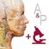 Anatomy & Physiology 6.2.00 دانلود برنامه آناتومی و فیزیولوژی اندروید