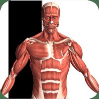 Visual Anatomy 2 3.0 دانلود نرم افزار مرجع آناتومی چند رسانه ای اندروید