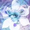 Blue Iris 2.0.60 دانلود نرم افزار دوربین امنیتی و وب کم