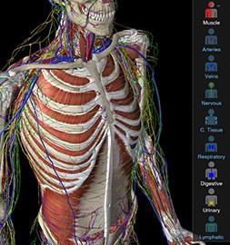 Essential Anatomy 3 1.1.3 دانلود نرم افزار آناتومی بدن انسان + دیتا