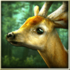 Forest HD 1.5.1 Mod دانلود لایو والپیپر جنگل