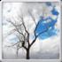 دانلود Lonely Tree Live Wallpaper 1.42 لایو والپیپر درخت تنها اندروید