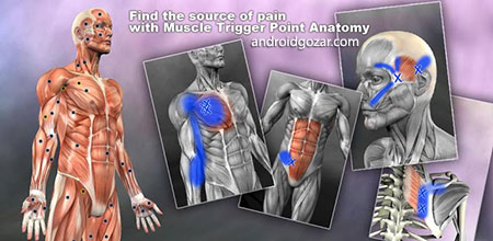 Muscle Trigger Point Anatomy 2.2.2 Trigger Point Muscle Anatomy