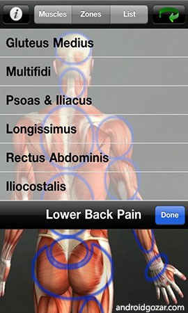 Muscle Trigger Point Anatomy Apk • IndexOfDownload.Com