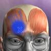Muscle Trigger Point Anatomy 2.4.8 دانلود برنامه آناتومی عضلات نقطه ماشه ای اندروید