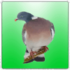 Professional Birds Calls 1.1 دانلود نرم افزار صدای پرندگان