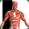 Visual Anatomy 5.0 دانلود نرم افزار آناتومی سه بعدی اندروید